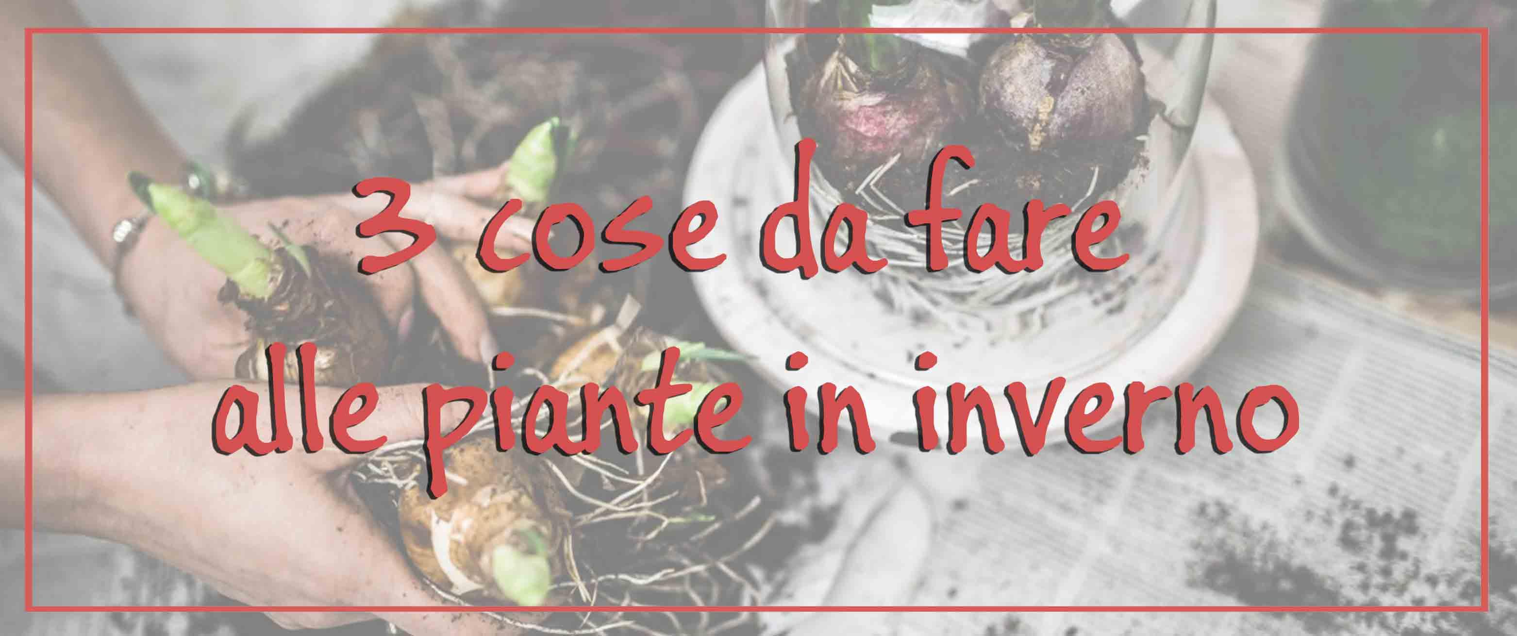 3 cose da fare alle piante in inverno